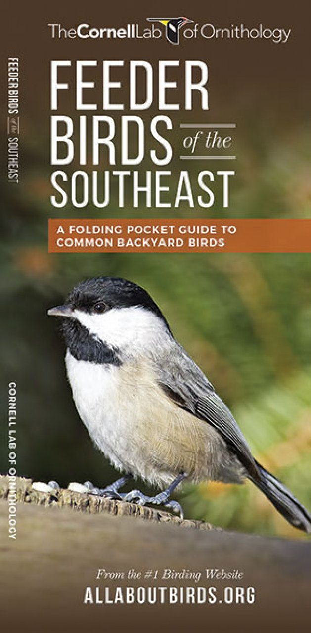 feeder birds of the southeast a folding pocket guide to common