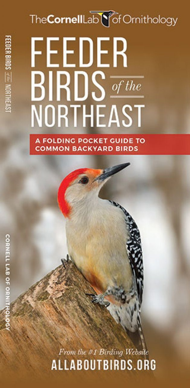 feeder birds of the northeast a folding pocket guide to common