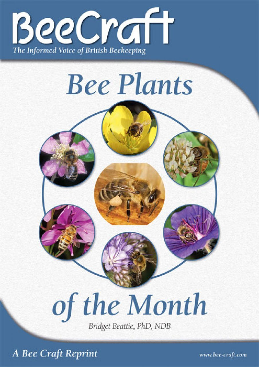 Bee Plants of the Month