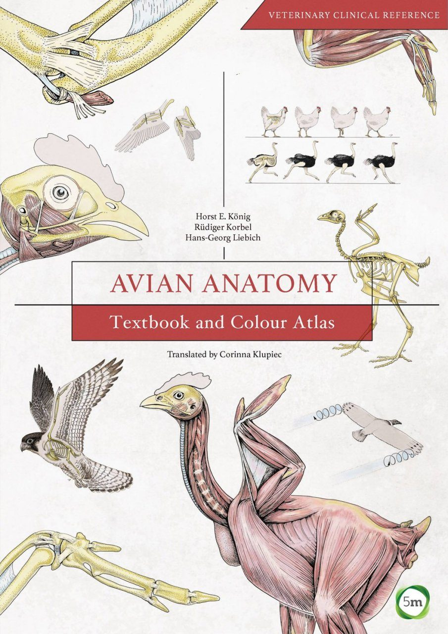 Avian Anatomy: Textbook and Colour Atlas: Horst Erich König, Rüdiger ...