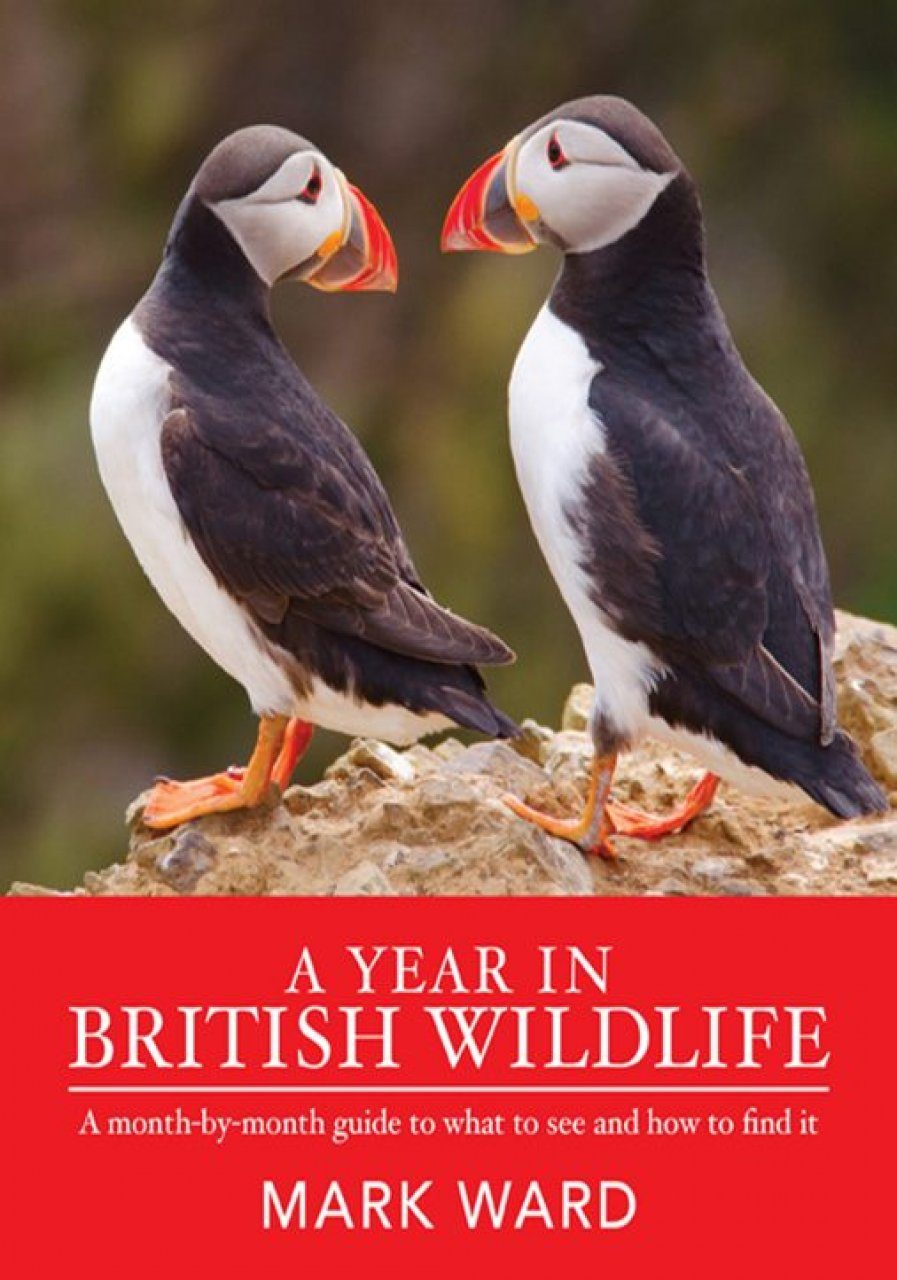 A Year in British Wildlife