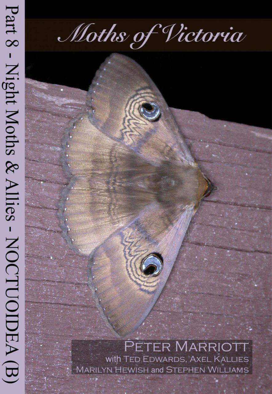 Moths of Victoria, Part 8: Night Moths and Allies – Noctuoidea (B)
