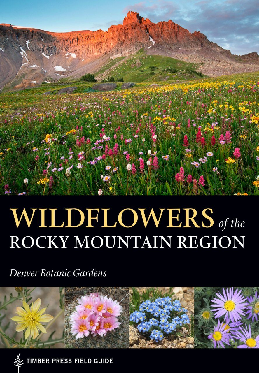 Wildflowers of the Yellowstone [Infographic]