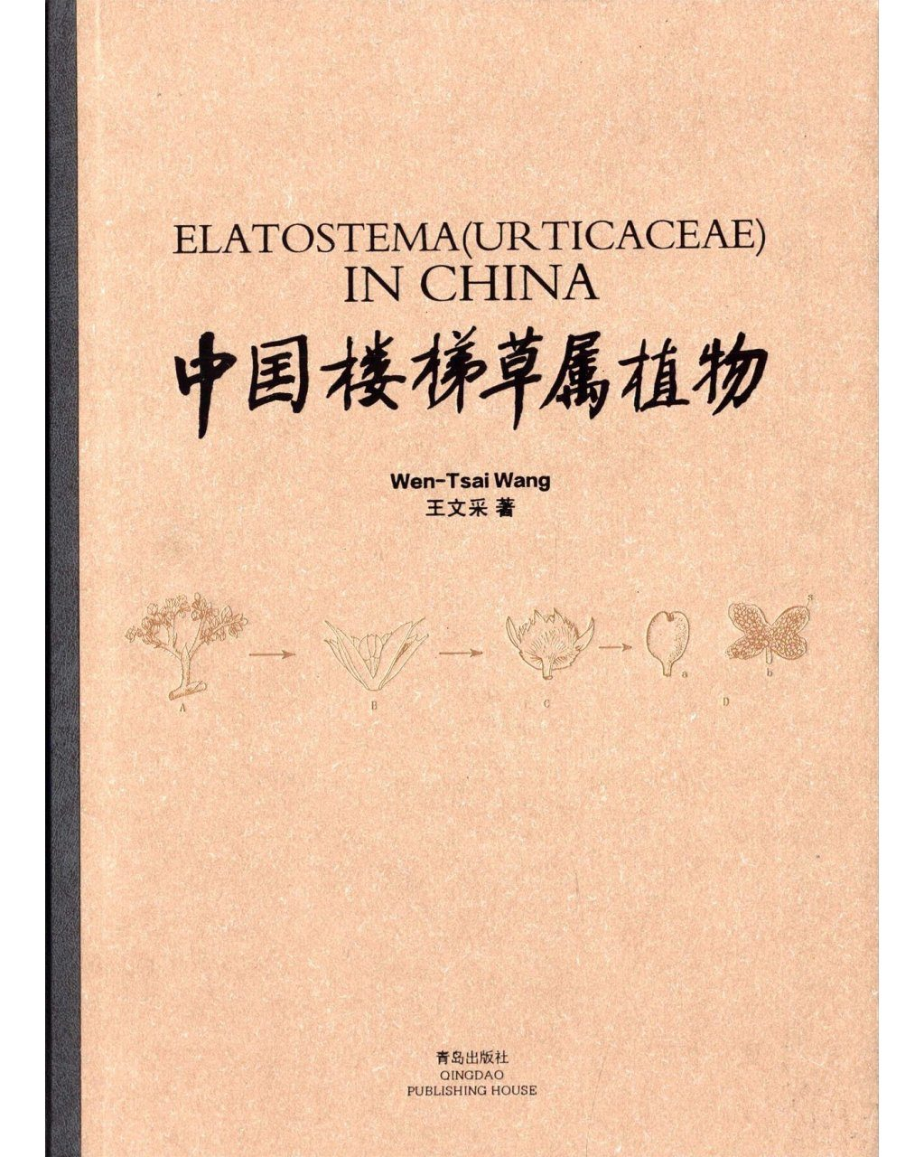 Elatostema (Urticaceae) in China