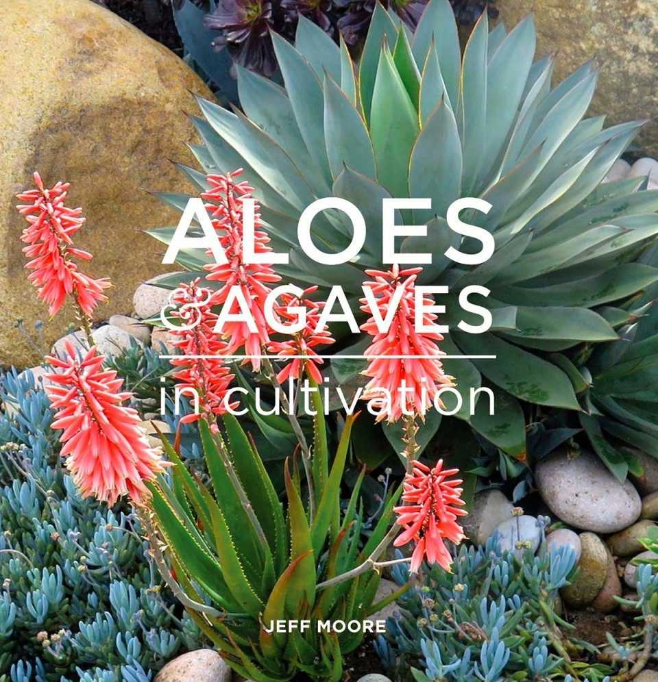 Aloes and Agaves in Cultivation