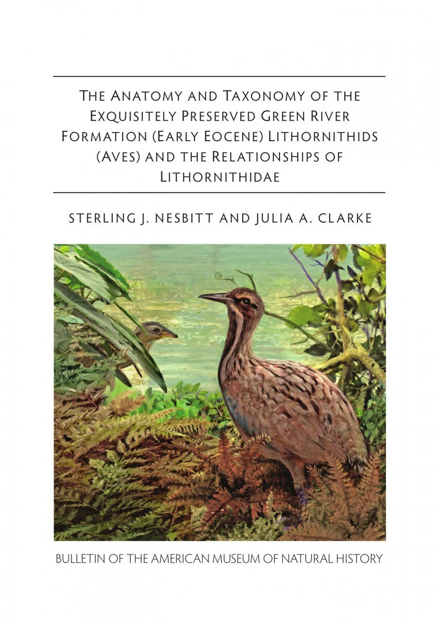 The Anatomy and Taxonomy of the Exquisitely Preserved Green River Formation (Early Eocene) Lithornithids (Aves) and the Relationships of Lithornithidae