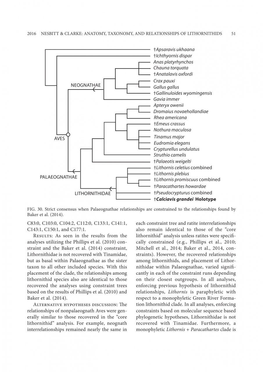 The Anatomy and Taxonomy of the Exquisitely Preserved Green River ...