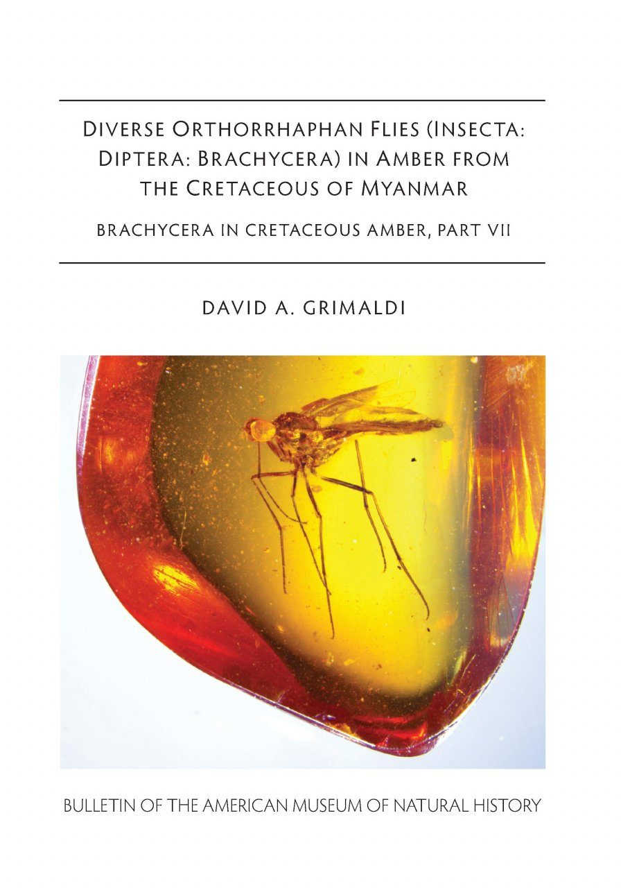 Diverse Orthorrhaphan Flies (Insecta: Diptera: Brachycera) in Amber from the Cretaceous of Myanmar: Brachycera in Cretaceous Amber, Part 7