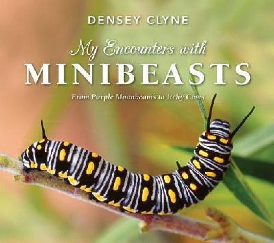 My Encounters with Minibeasts