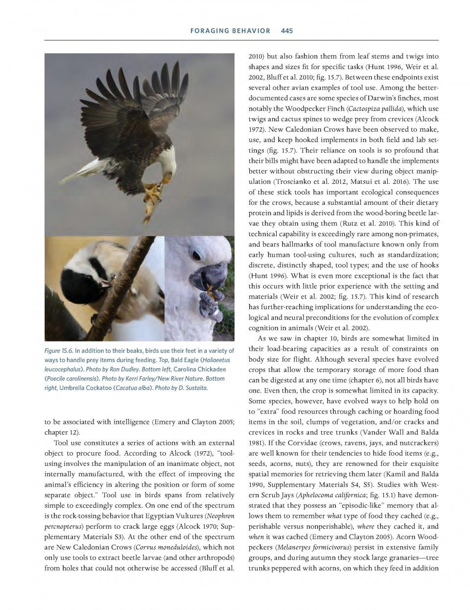 Ornithology Foundation Analysis And Application Michael L Diagram Additionally Bald Eagle Life Cycle On