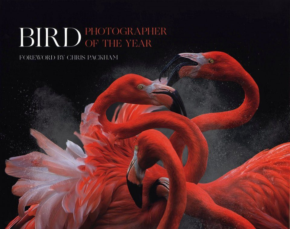 Bird Photographer of the Year, Collection 3