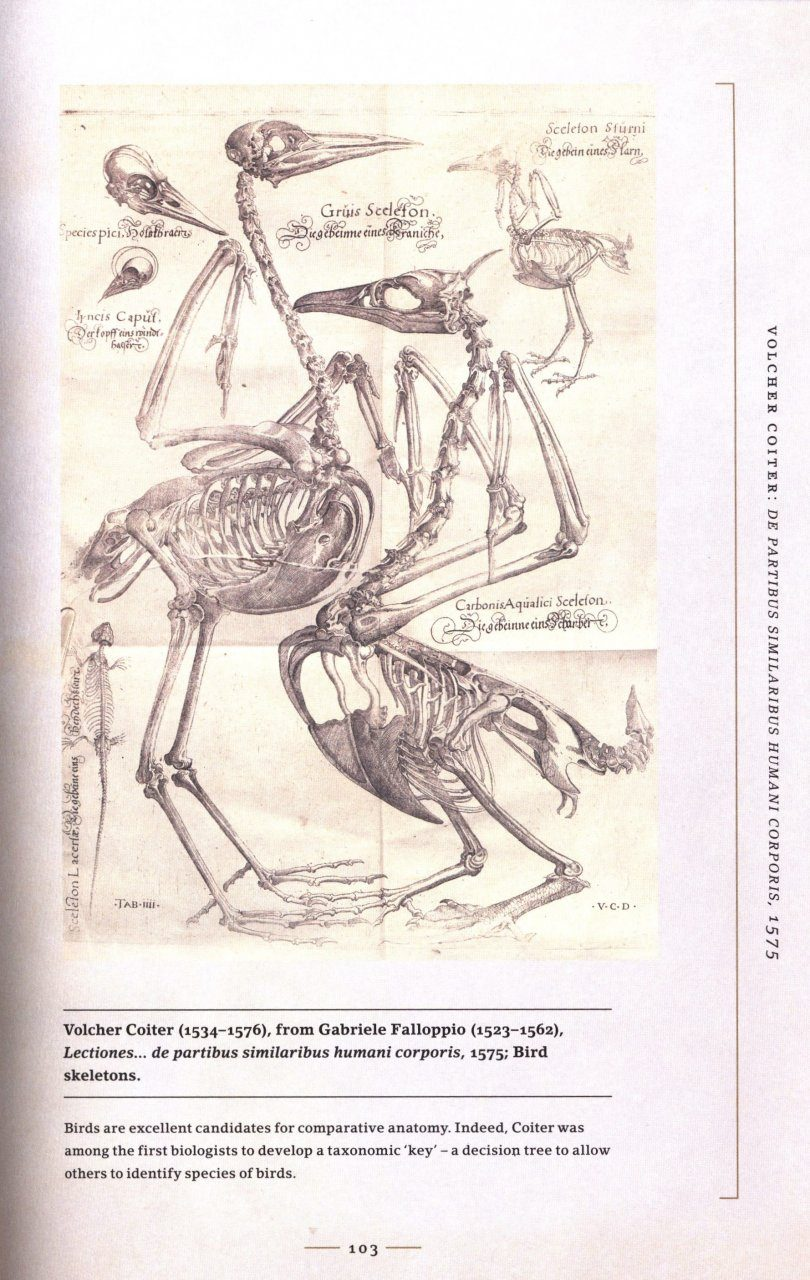 The Art Of Animal Anatomy All Life Is Here Dissected And Depicted
