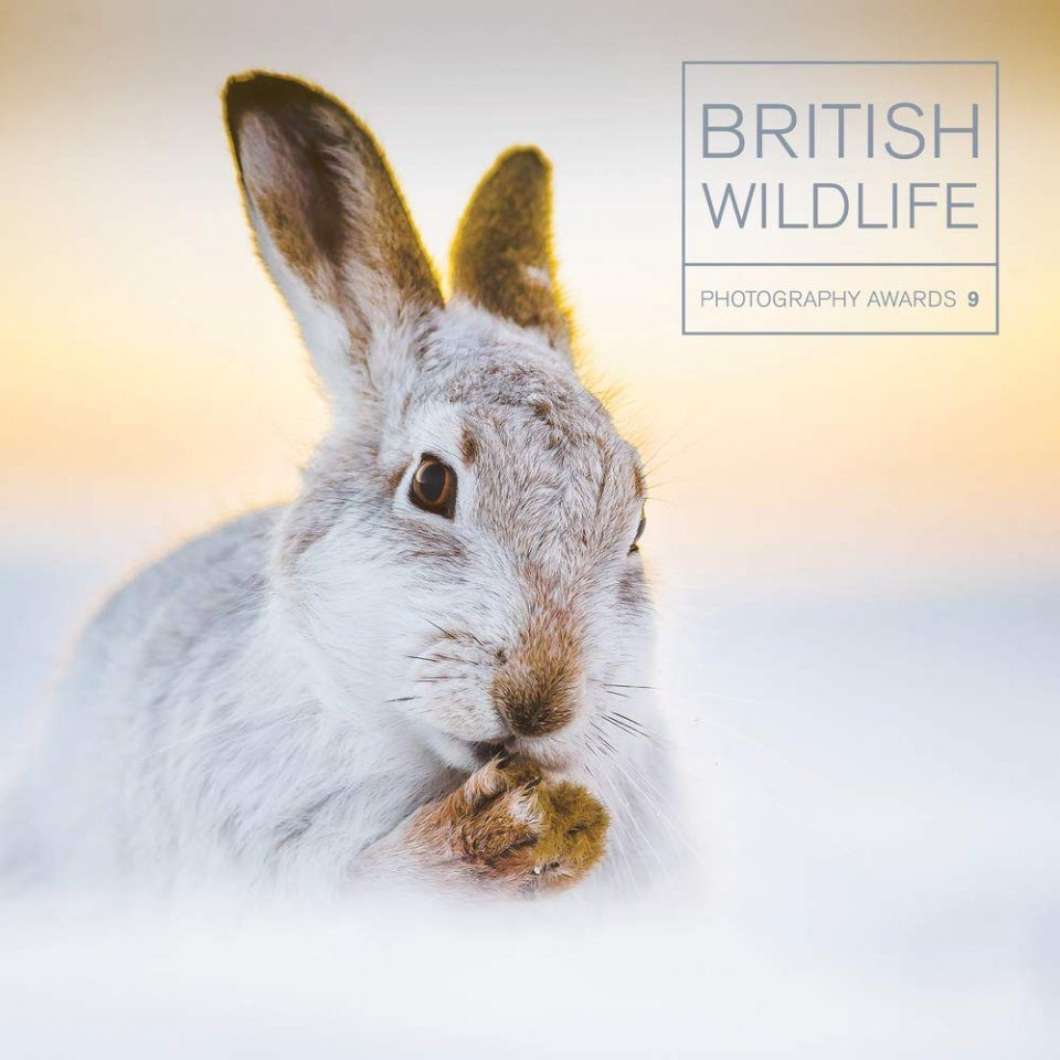 British Wildlife Photography Awards, Collection 9