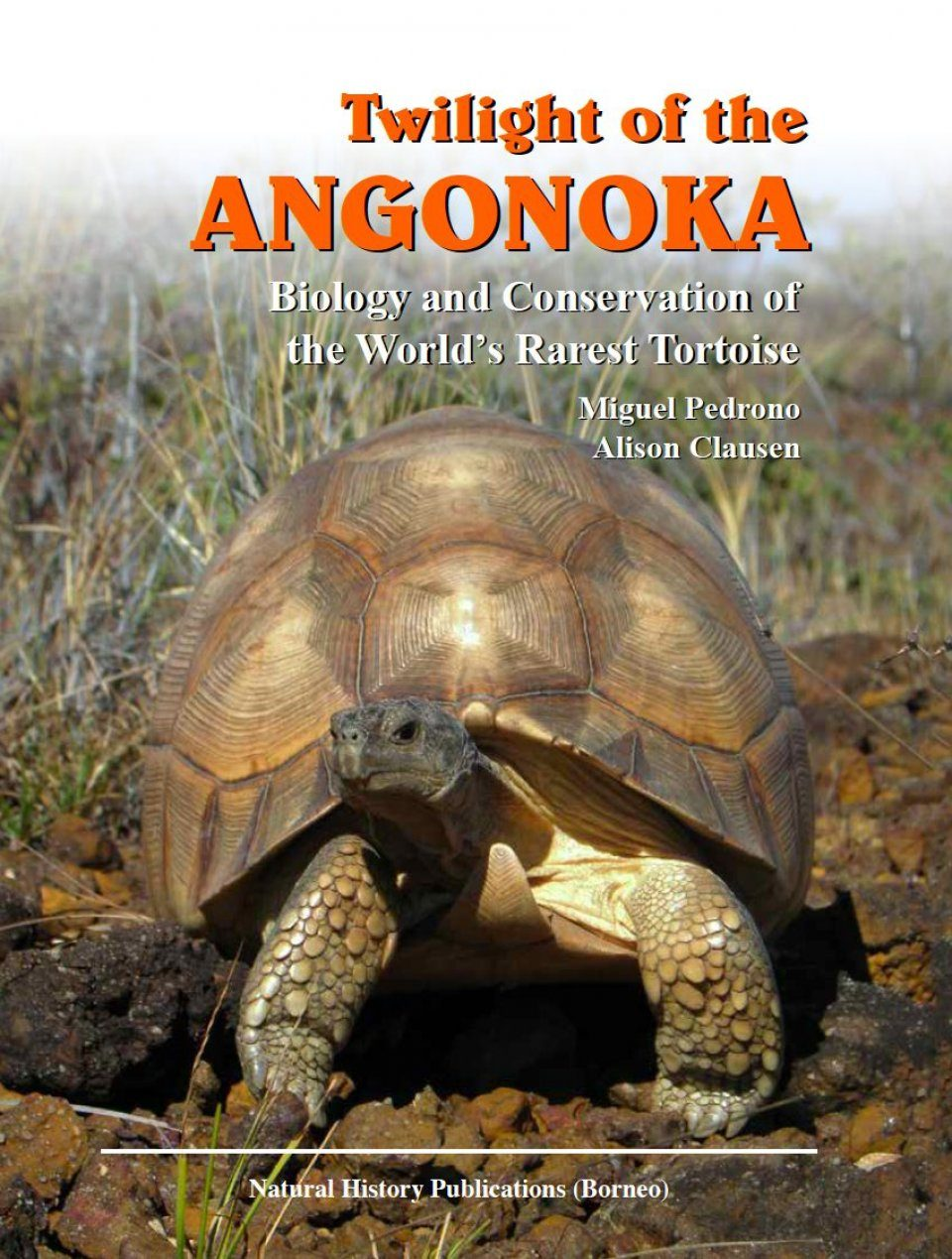 Twilight of the Angonoka