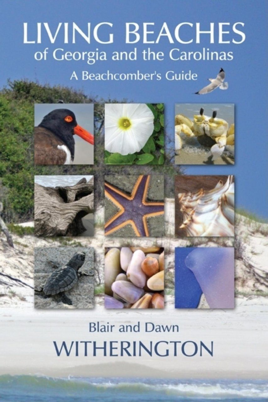 Living Beaches of Georgia and the Carolinas