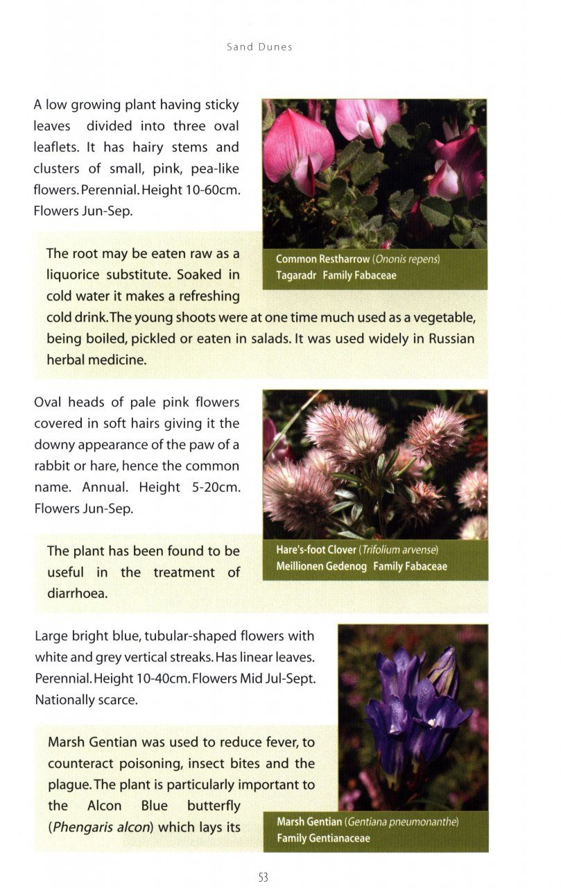 Anglesey Flowering Plants And Their Habitats Gareth Rowlands Nhbs