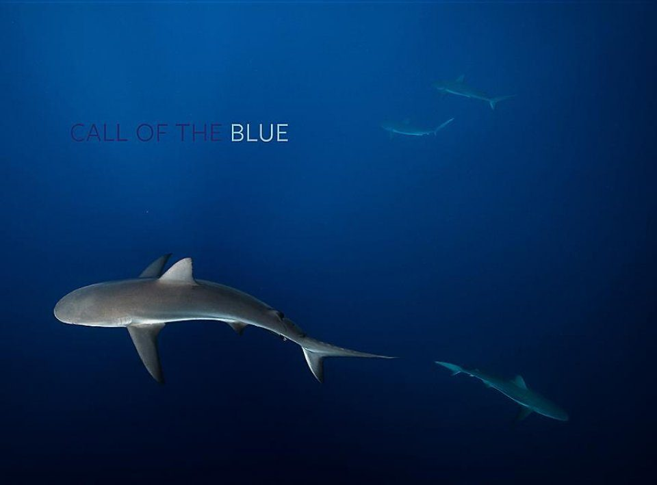 Call of the Blue