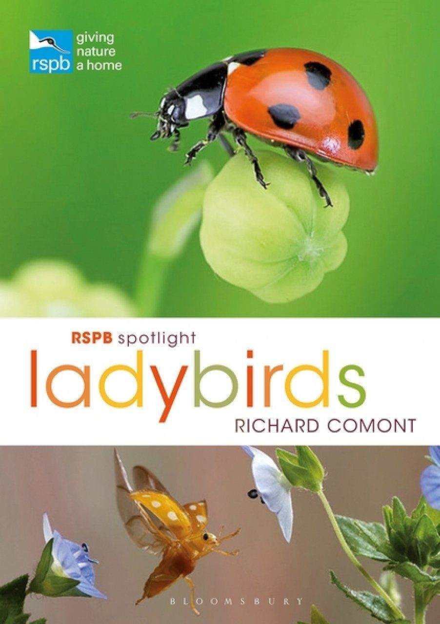 RSPB Spotlight: Ladybirds