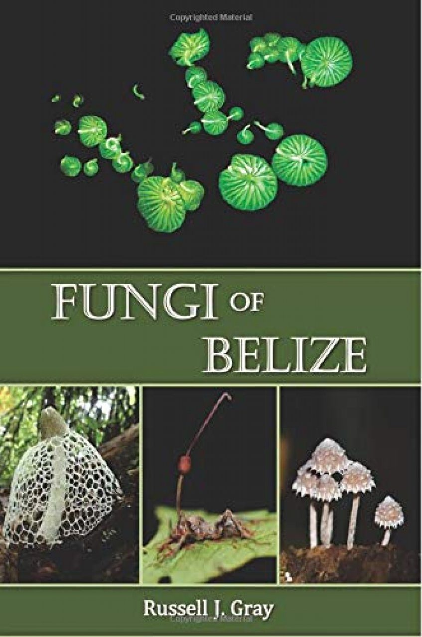 Fungi of Belize