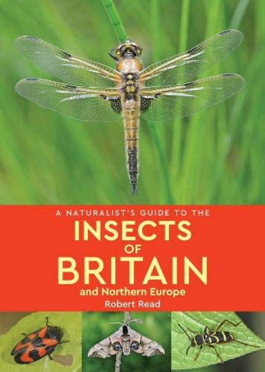 A Naturalist's Guide to the Insects of Britain and Northern Europe