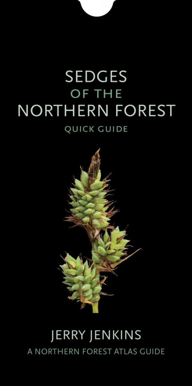 Sedges of the Northern Forest: Quick Guide