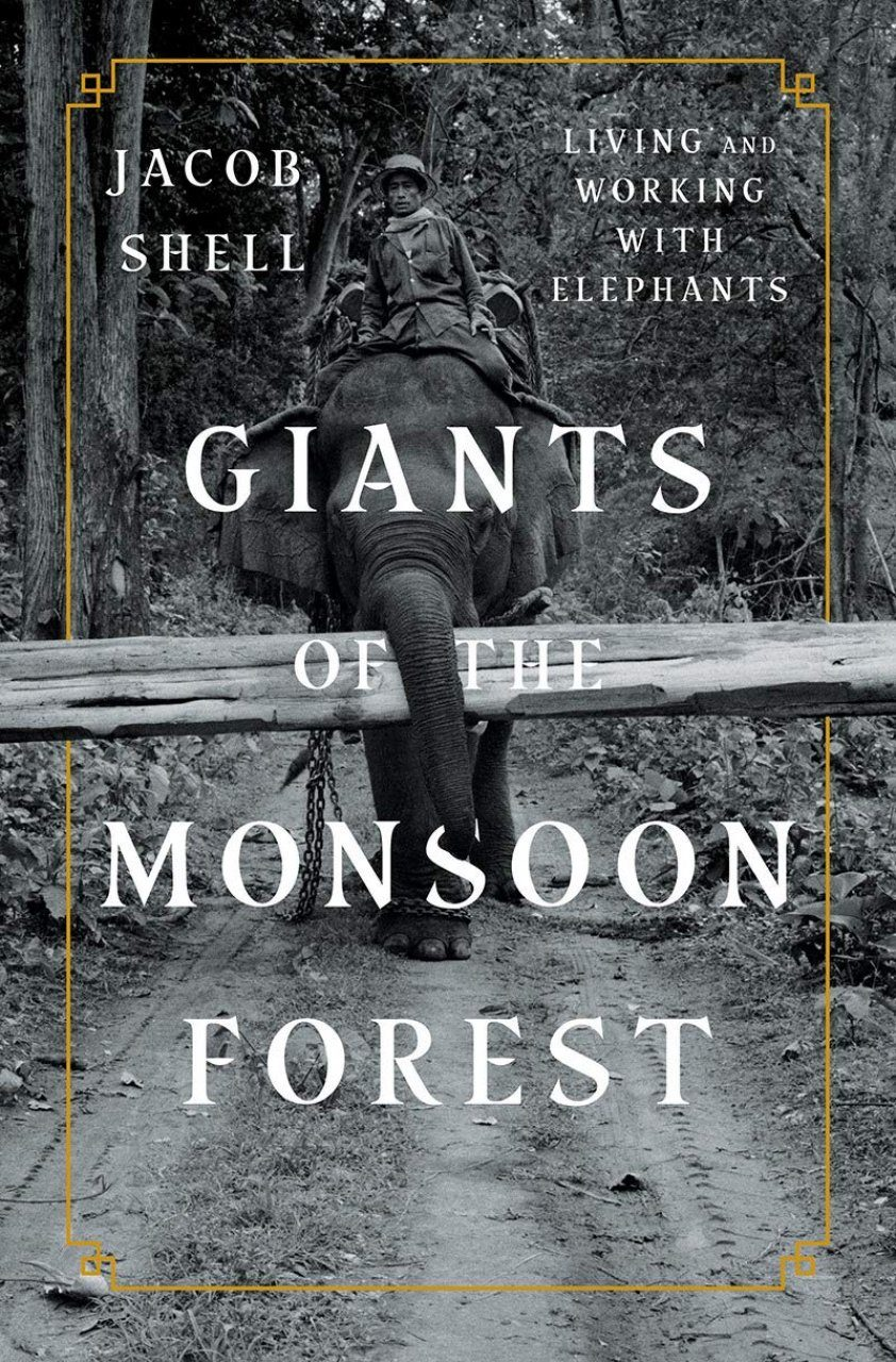 Image result for jacob shell giants of the monsoon forest