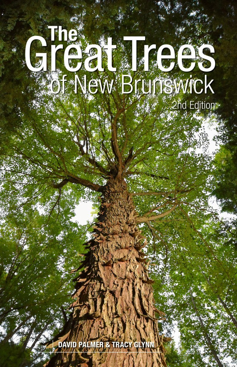 The Great Trees of New Brunswick