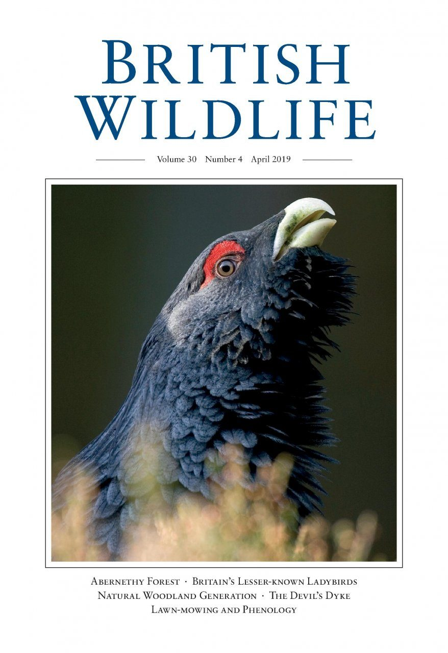 British Wildlife 30.4 April 2019