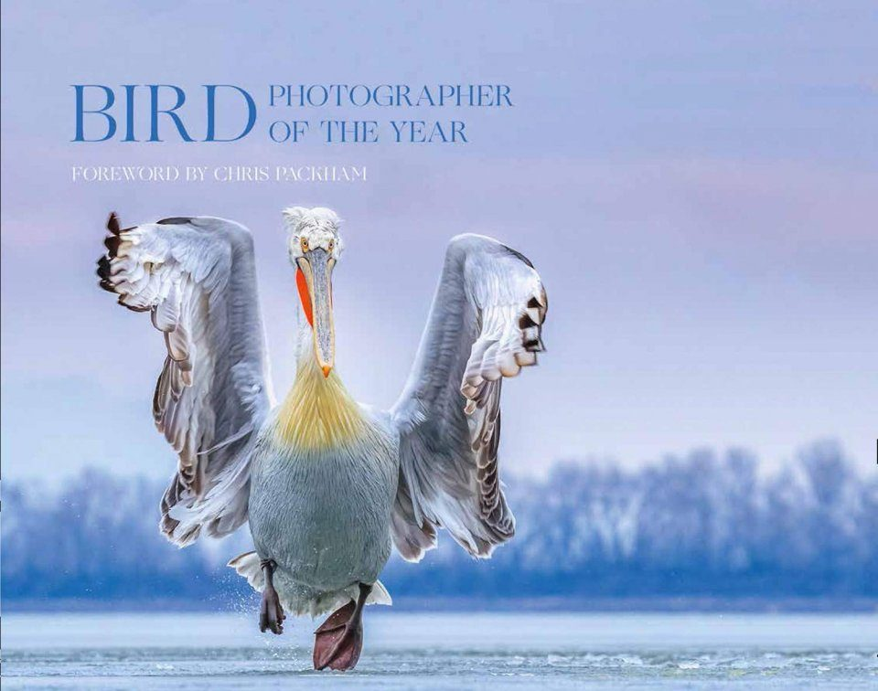 Bird Photographer of the Year, Collection 4
