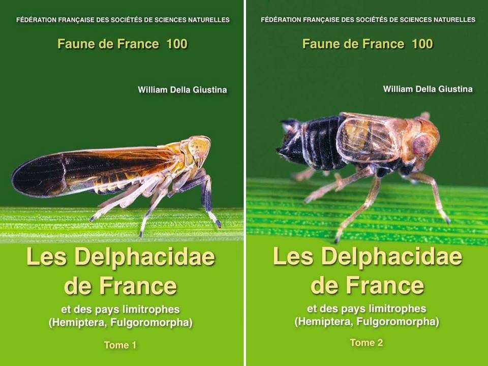 Faune de France, Volume 100: Les Delphacidae de France et des Pays Limitrophes (Hemiptera, Fulgomorpha) [The Delphacidae of France and Neighbouring Countries] (2-Volume Set)