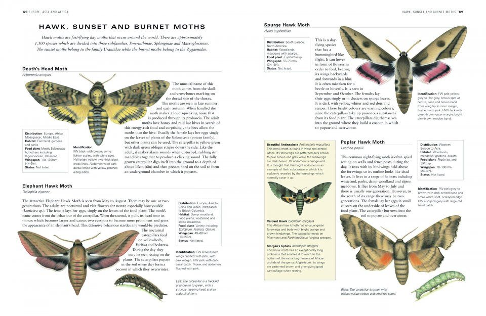 A Natural History and Identification Guide The Illustrated World Encyclopedia of Butterflies and Moths