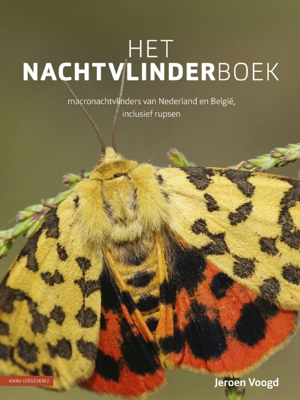 Het Nachtvlinderboek: Macronachtvlinders van Nederland en België, Inclusief Rupsen [The Book of Moths: Nocturnal Macro-Moths of the Netherlands and Belgium, Including Caterpillars]