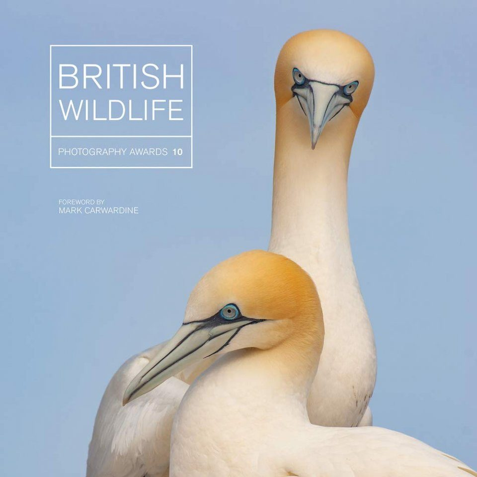 British Wildlife Photography Awards, Collection 10
