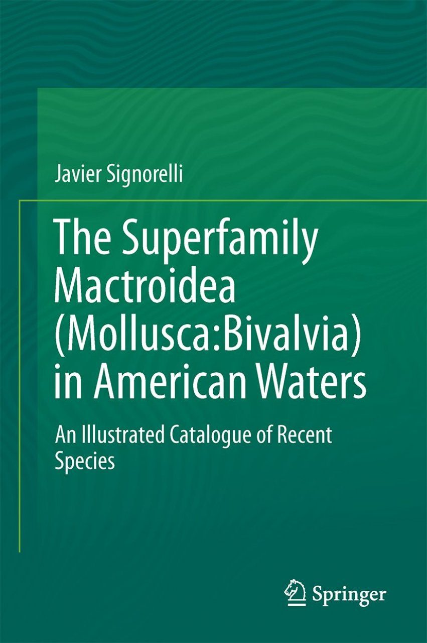The Superfamily Mactroidea (Mollusca: Bivalvia) in American Waters