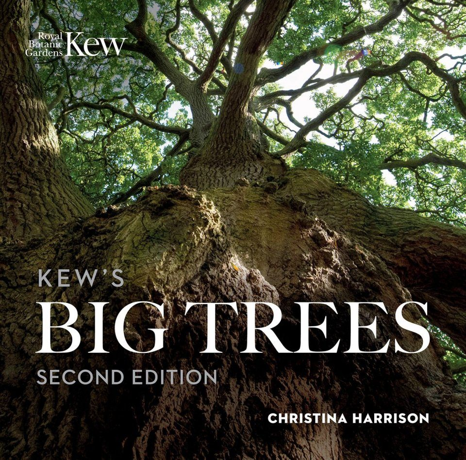 Kew's Big Trees
