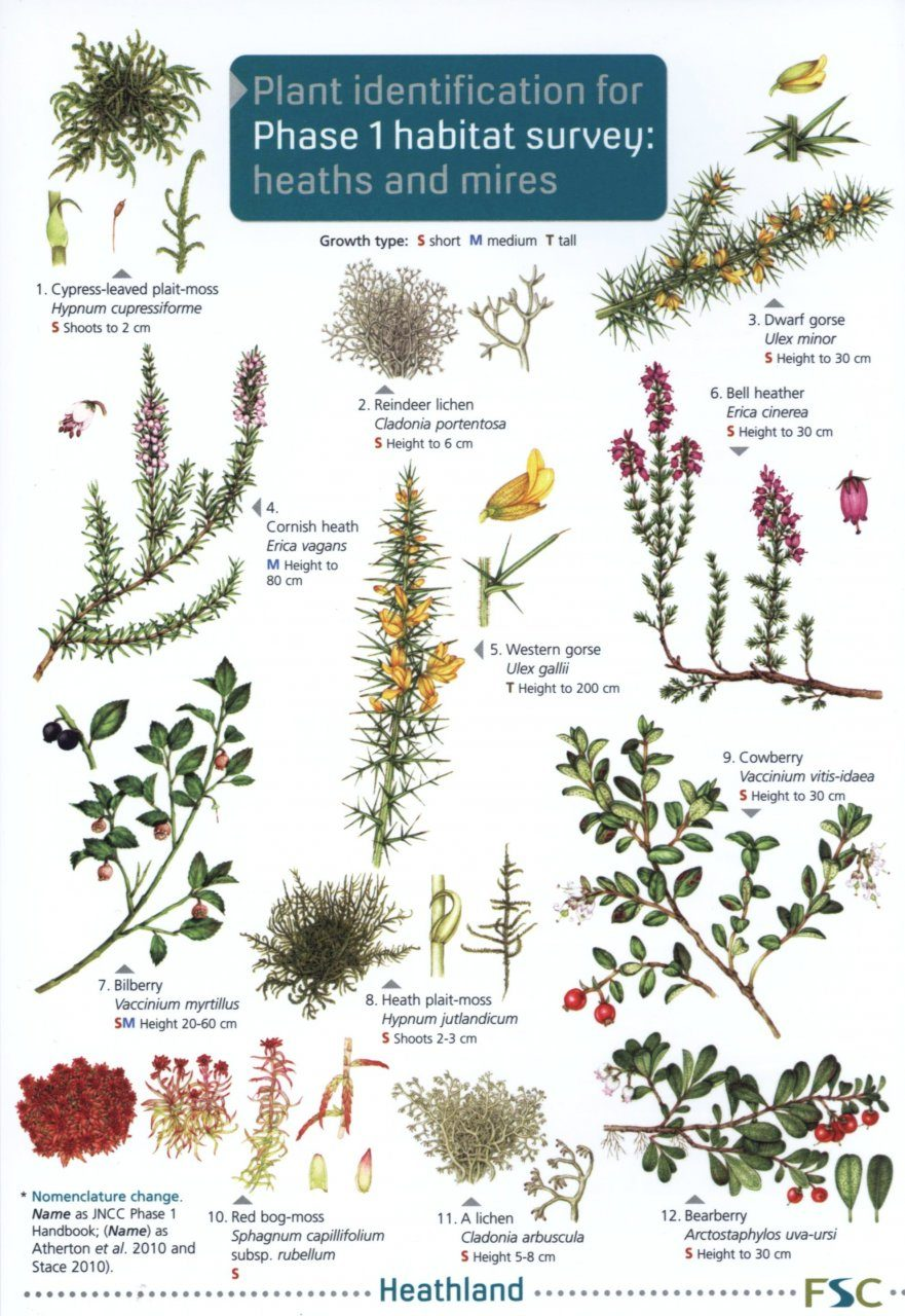 Plant Identification for Phase 1 Habitat Survey: Heaths and Mires