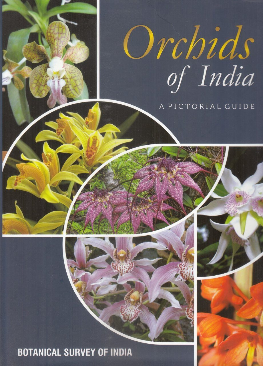 Orchids of India