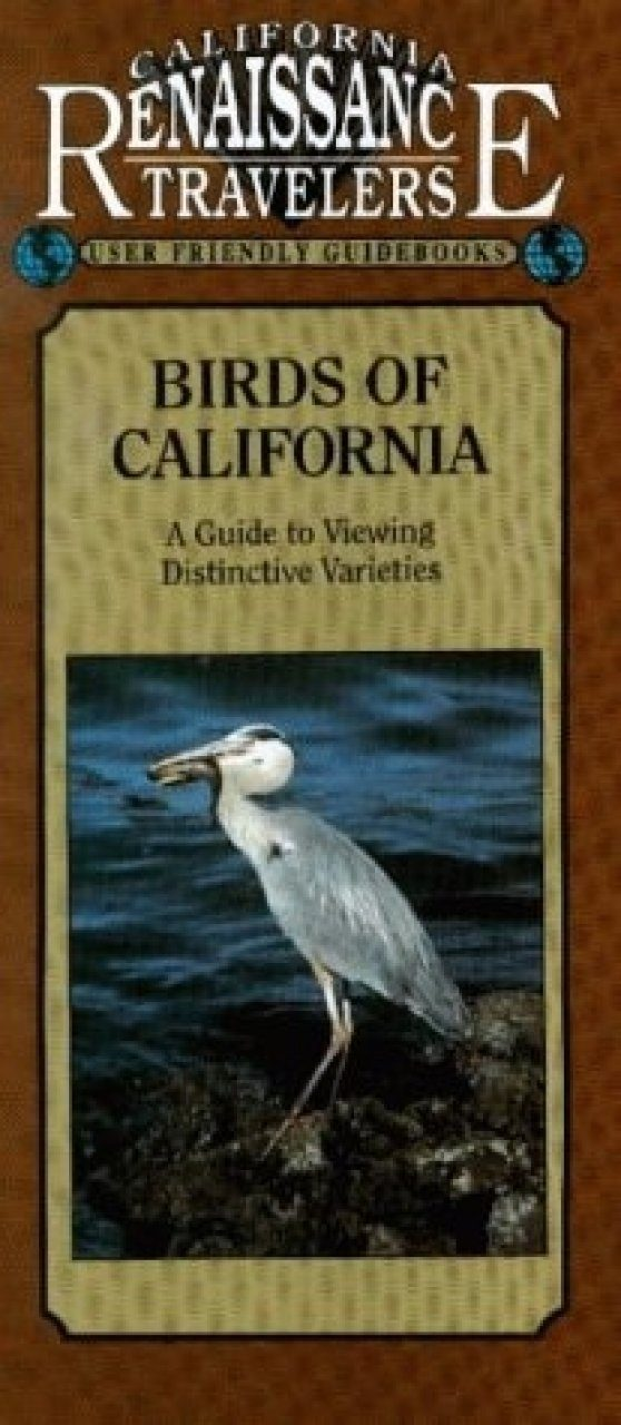 Birds of California: A Guide to Viewing Different Varieties