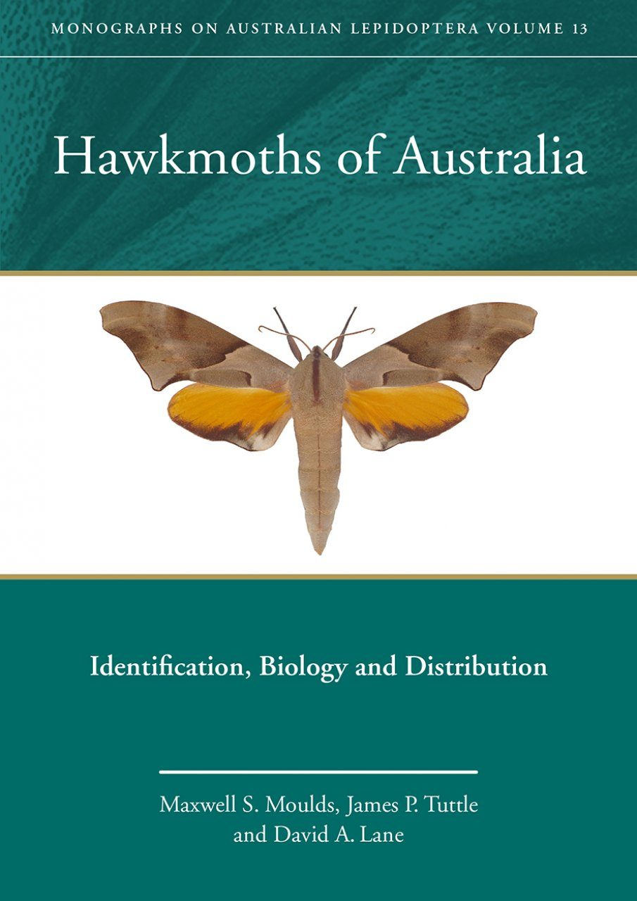 Hawkmoths of Australia