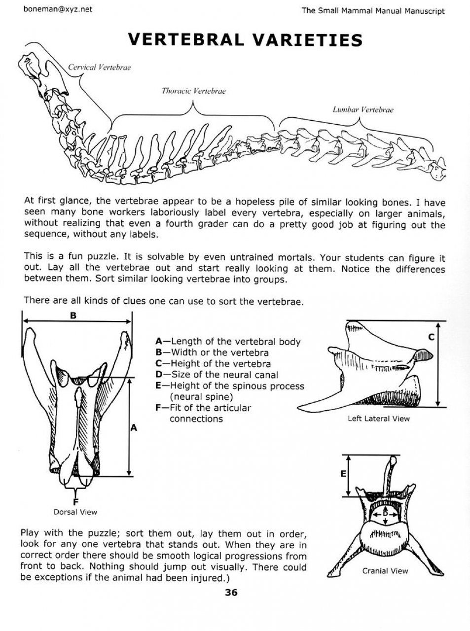 Humerus Bone Manual Guide