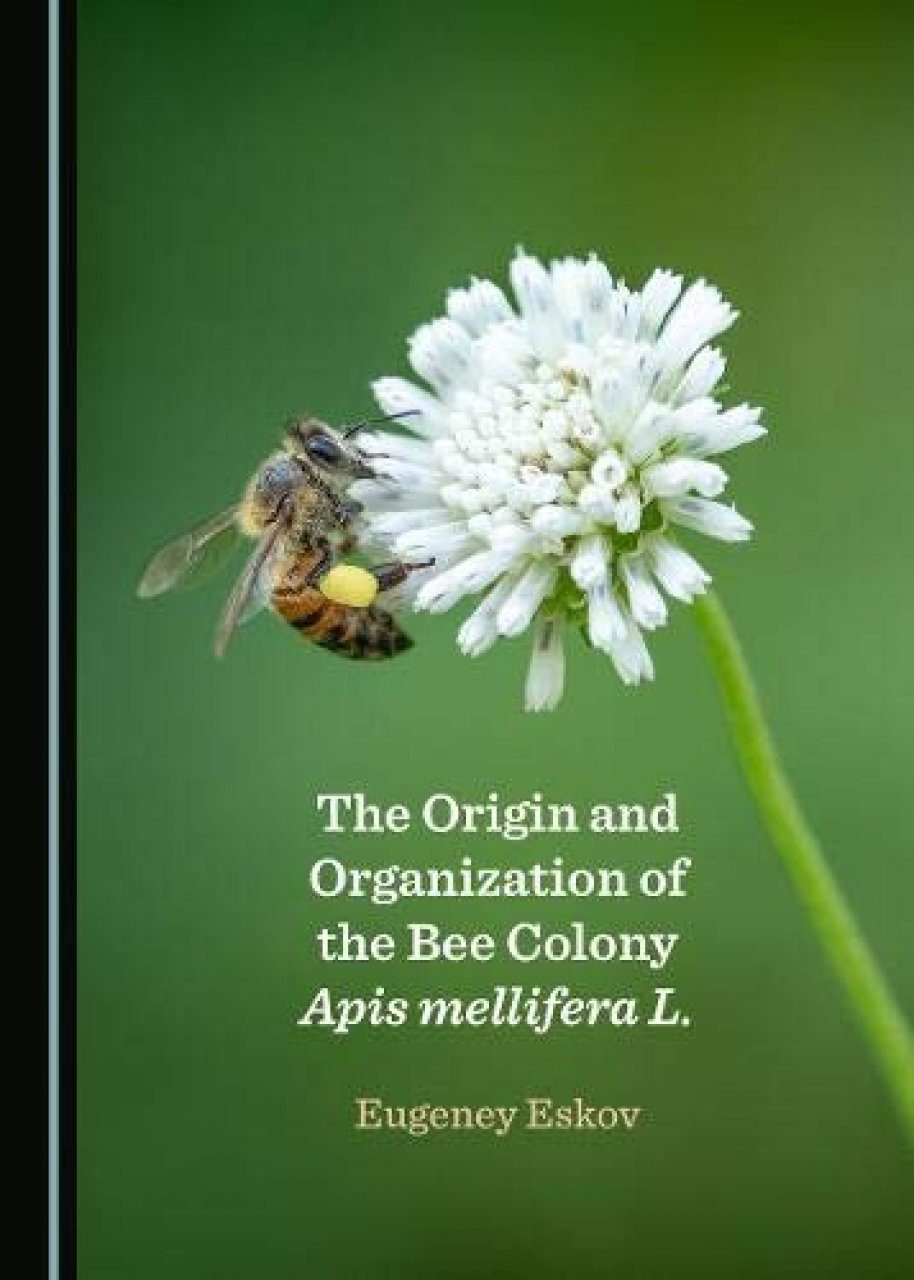 The Origin and Organization of the Bee Colony Apis mellifera L.