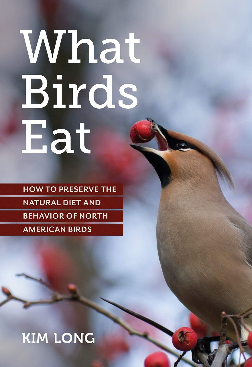What Birds Eat