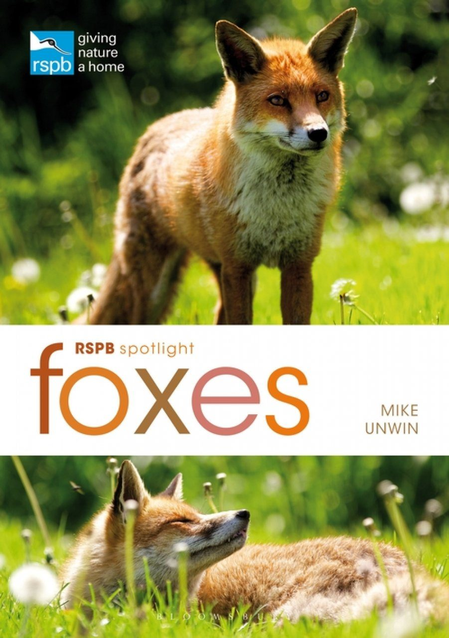 RSPB Spotlight: Foxes