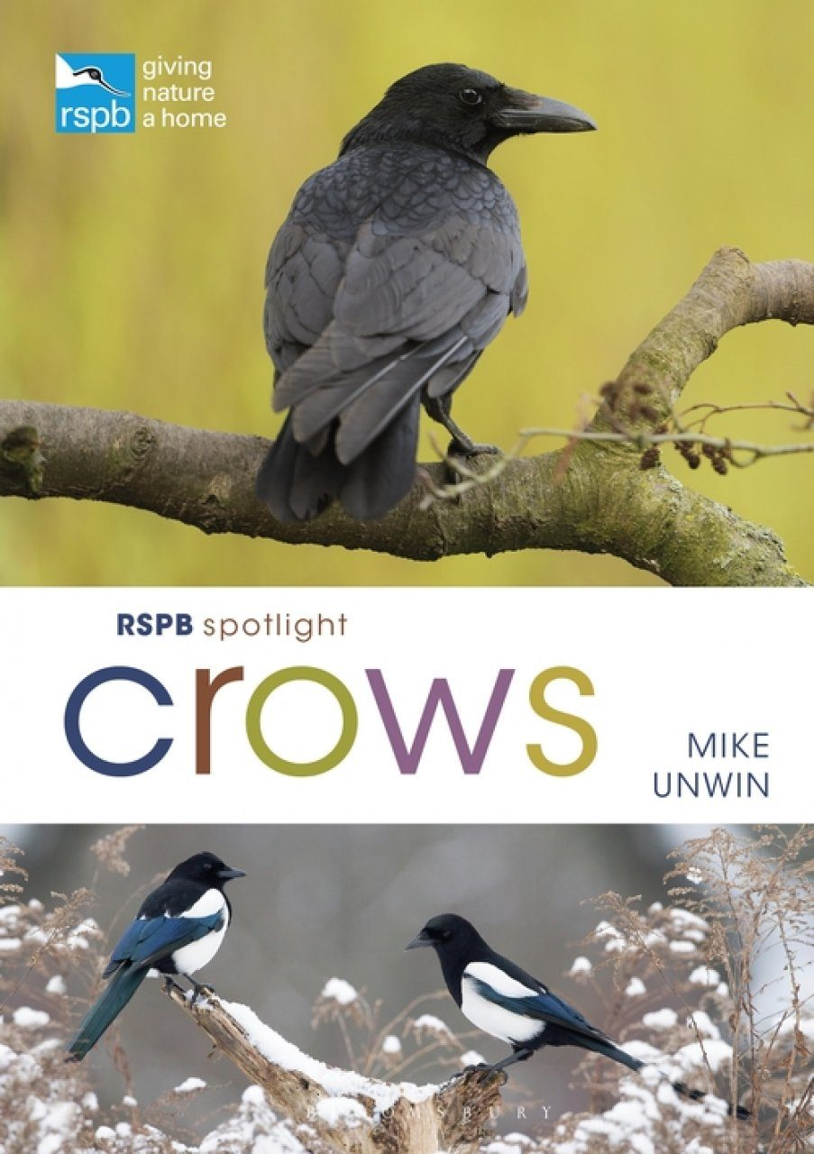 RSPB Spotlight: Crows