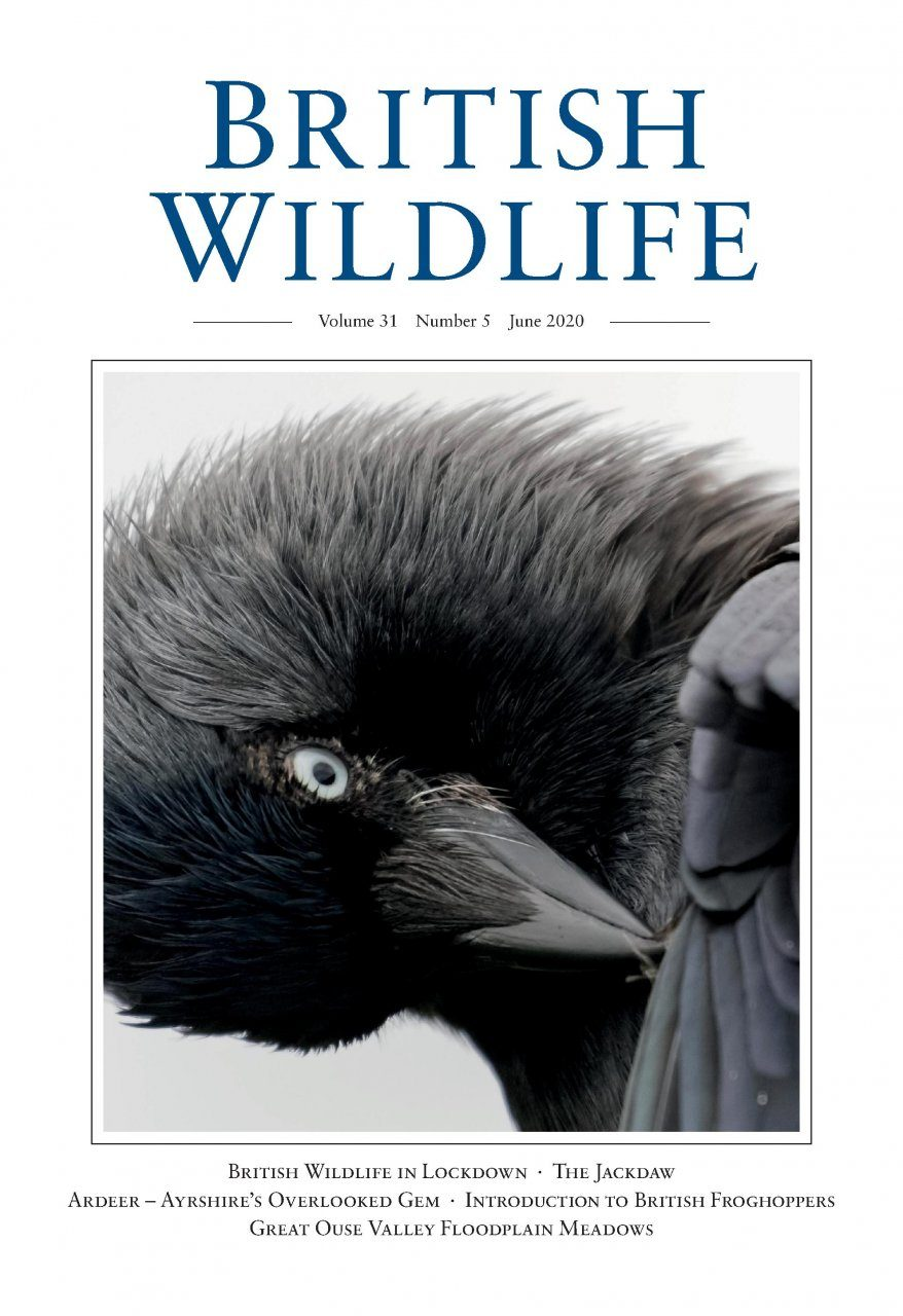 British Wildlife 31.5 June 2020