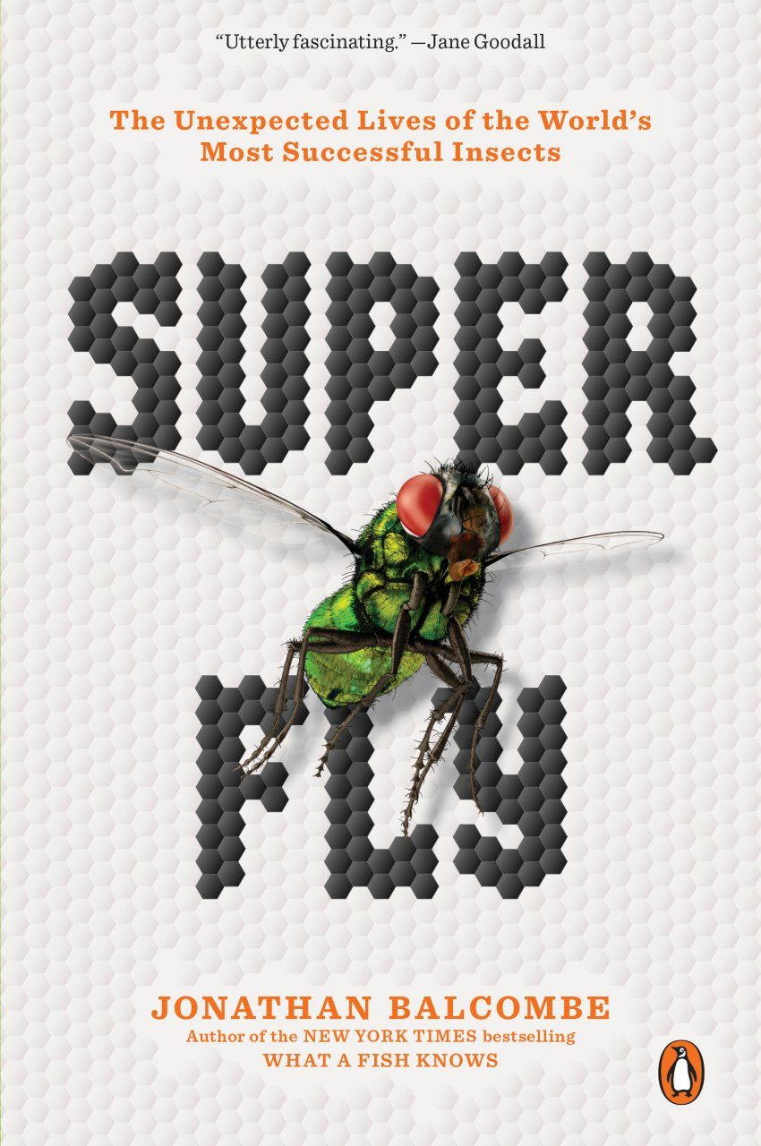 Super Fly