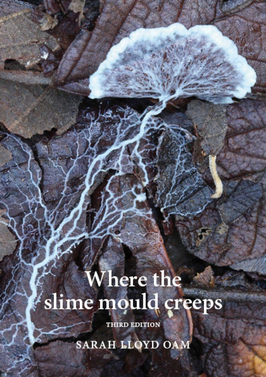 Where the Slime Mould Creeps