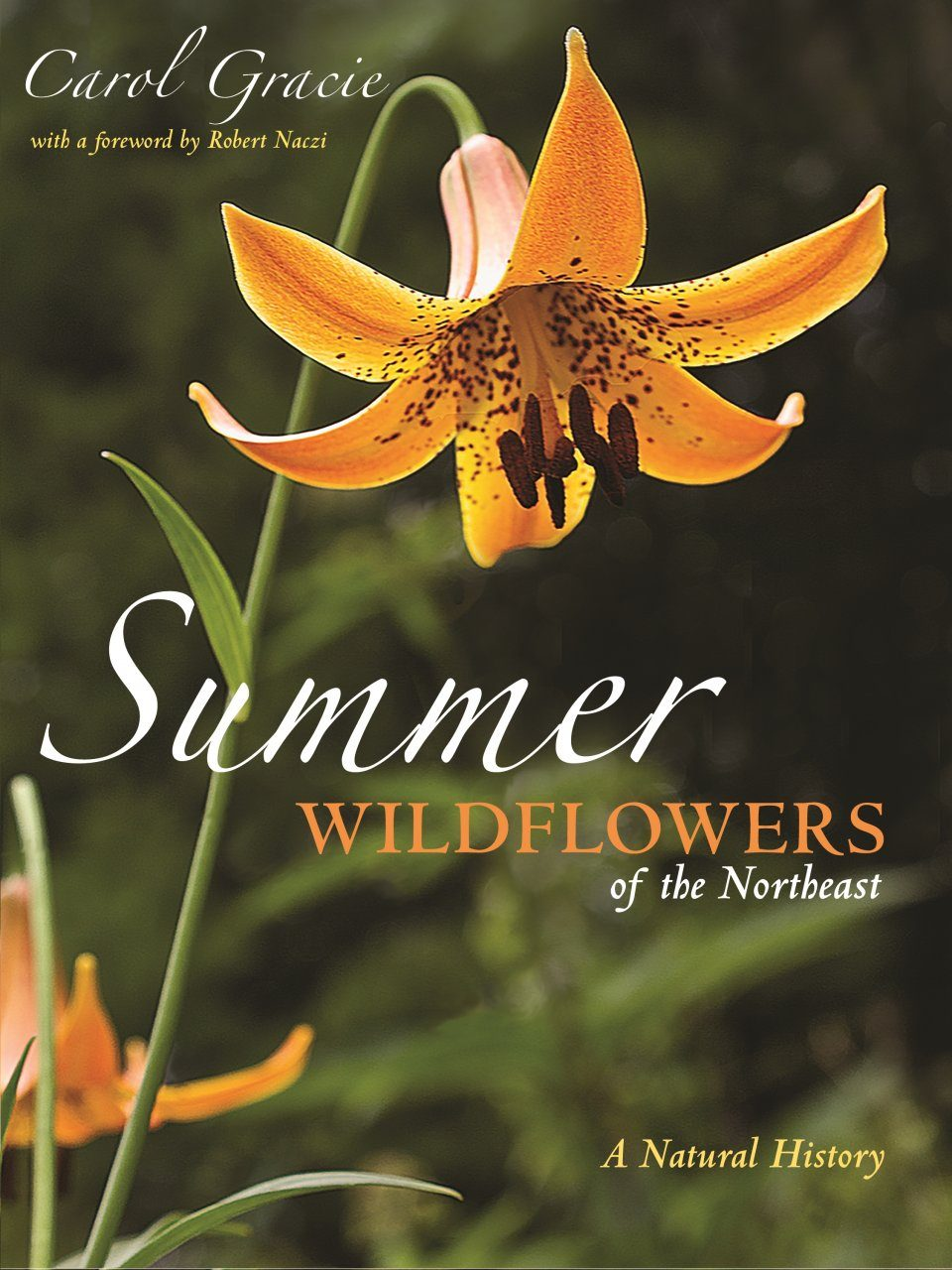 Summer Wildflowers of the Northeast
