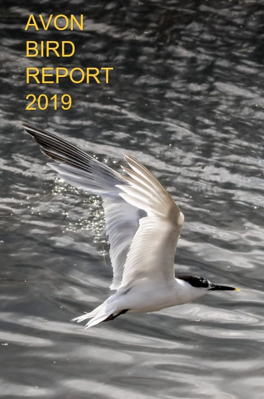 Avon Bird Report 2019