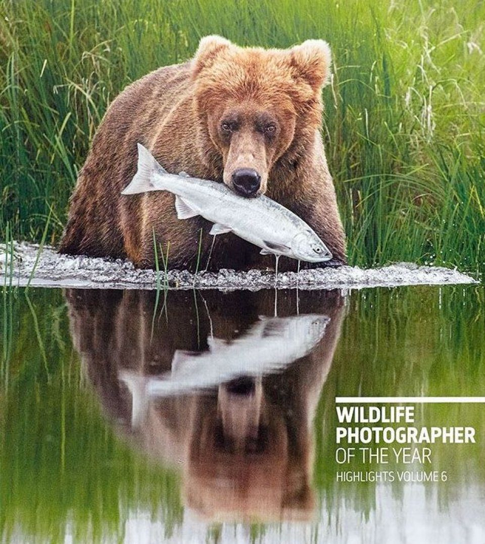Wildlife Photographer of the Year: Highlights, Volume 6